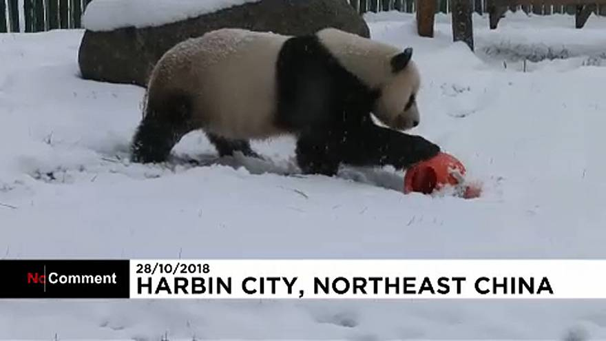 Pandashow Kínában