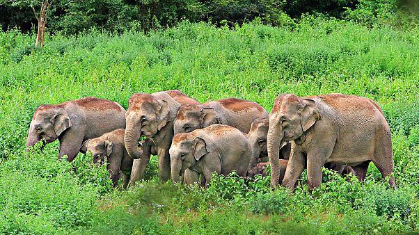 صندوق جهانی طبیعت: ۶۰ درصد حیات وحش جهان در نیم قرن گذشته از بین رفته است