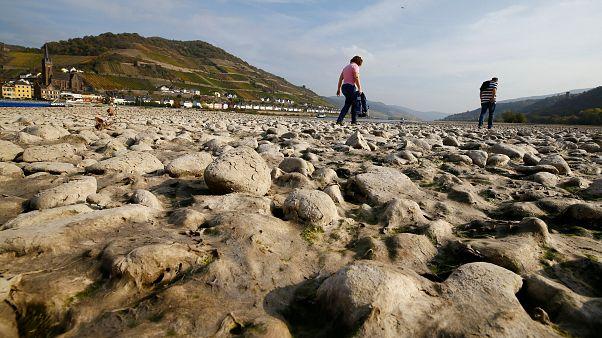 Niedrigwasser am Rhein: Wasserstand sinkt weiter. Hitzewelle hält an