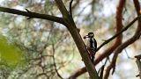 """Le WWF réclame un """"grand accord pour la nature"""""""