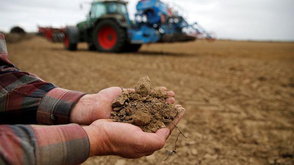 Dürreperiode: Bis zu 50% weniger Ertrag. EU erhöht Zuschüsse an Bauern