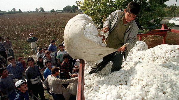 اربکستان؛ برکناری معاون نخست وزیر به دلیل بد رفتاری با کشاورزان مزارع پنبه