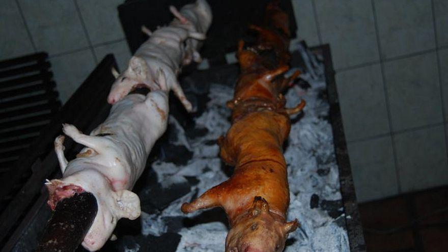 VİDEO | İğrenç Yemekler Müzesi: Boğa penisi, çürümüş köpek balığı eti menüde