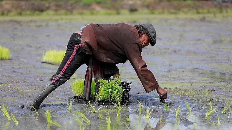 BM: Asya'da çarpık kentleşme yetersiz beslenmeye ve obeziteye yol açıyor