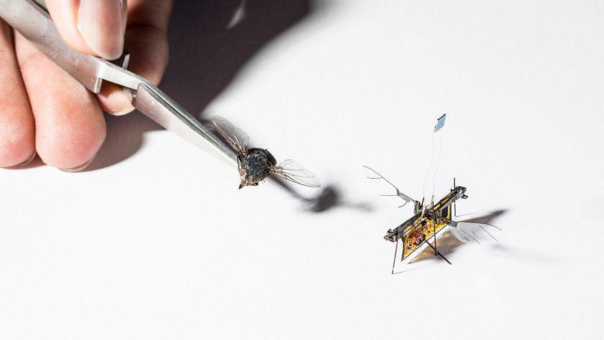 Dünyanın sinek boyutunda ilk kablosuz uçan robotu