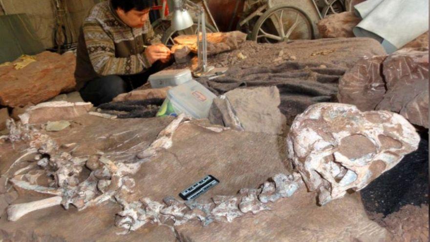 Arjantin'de 110 milyon yıl öncesine ait dinozor fosilleri bulundu