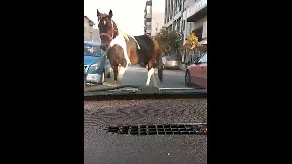 Θεσσαλονίκη: Άλογο ...βγήκε βόλτα στο κέντρο της πόλης - BINTEO