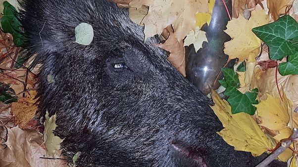 Metzger (80) tötet Wildschwein auf Parkplatz in Berlin