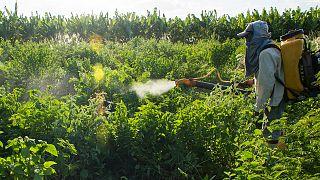 Türkiye kimyasal tarım ilacı satışında Avrupa dördüncüsü