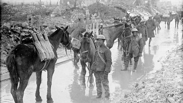 Horses carry munitions for Candian soldiers in France, April 2017.