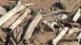 Grausiges Erbe der IS-Miliz: Mehr als 200 Massengräber