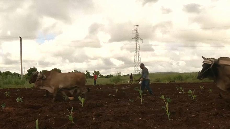 El sector agrícola de EEUU pide a Trump que levante el embargo a Cuba