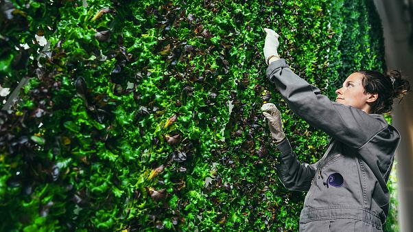 Are vertical farms the answer to healthier, longer-lasting food?