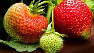 Erdbeeren aus Deutschland im November 2018