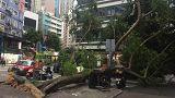 Hong Kong süper tayfun Mangkhut'un yıktığı on binlerce ağacı tartışıyor