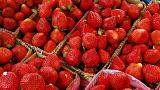 Australia's strawberry industry is worth €102 million