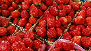 Australia's strawberry industry is worth €102 million