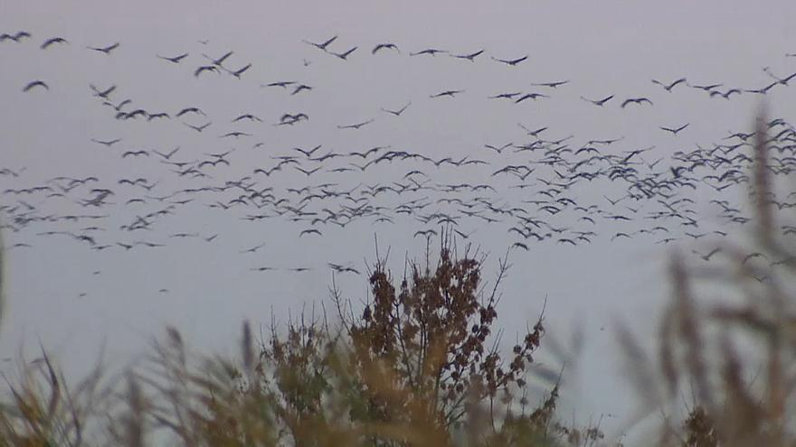 Record number of cranes cross Hungary's sky