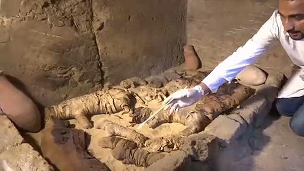 В Египте обнаружены мумии скарабеев