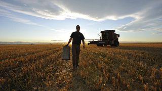 İntihara çiftçiler neden daha fazla eğilimli? | Araştırma