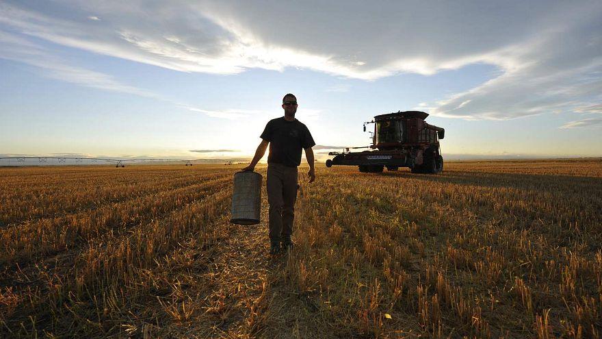 Araştırma: Çiftçiler intihara neden daha fazla eğilimli?