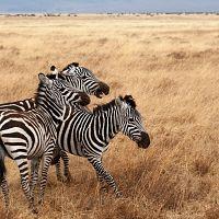 Eco-friendly wildlife safaris