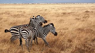 Eco-friendly wildlife safaris