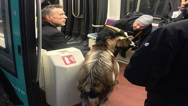 Commuters were stunned to see they were sharing a carriage with a goat