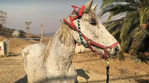 Animals including horses and donkeys have been evacuated to shelters