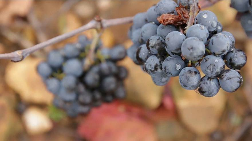 "A ""classic"" year in prospect for Beaujolais Nouveau"