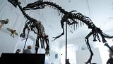 Παρίσι: Σε δημοπρασία σκελετός δεινοσαύρου