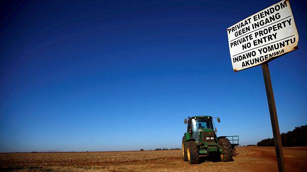 Güney Afrika'da beyazların toprakları anayasaya göre kamulaştırılacak