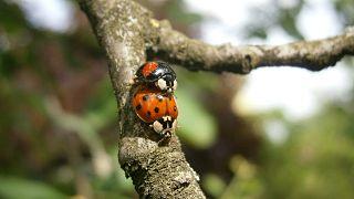 دراسة: التغيير المناخي يصيب الحشرات بالعقم