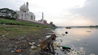 Maymun, 12 günlük bebeği annesinin kollarından çalarak öldürdü