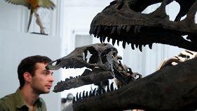 Preiskampf zwischen Dinos