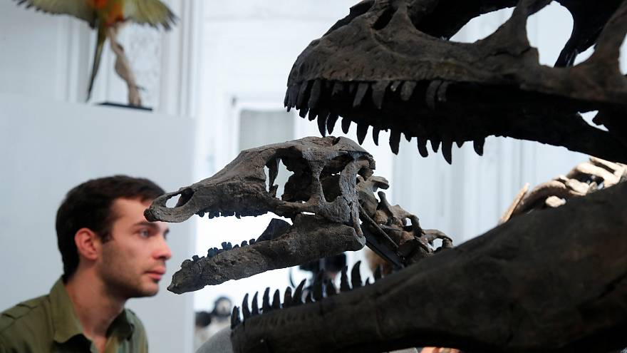 Fósseis de dinossauros vão a leilão