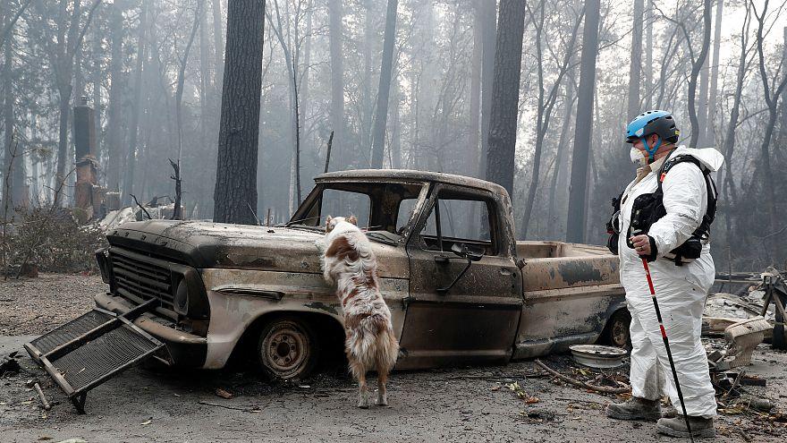 Hecatombe en California: 66 muertos y 631 desaparecidos