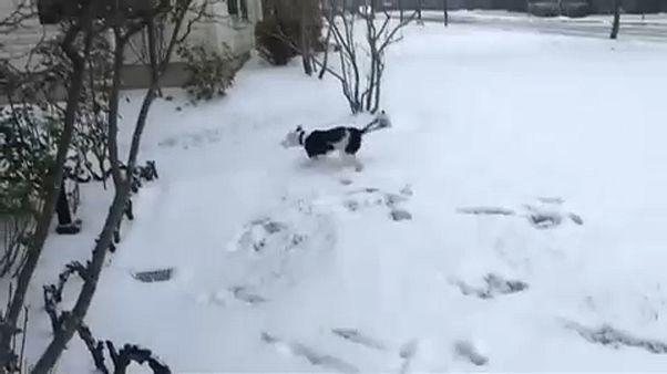 شاهد: عاصفة شتوية شرق الولايات المتحدة ومرح فوق مروج الثلج