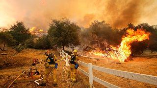 Kaliforniya'da orman yangınlarının sayısı neden artıyor?