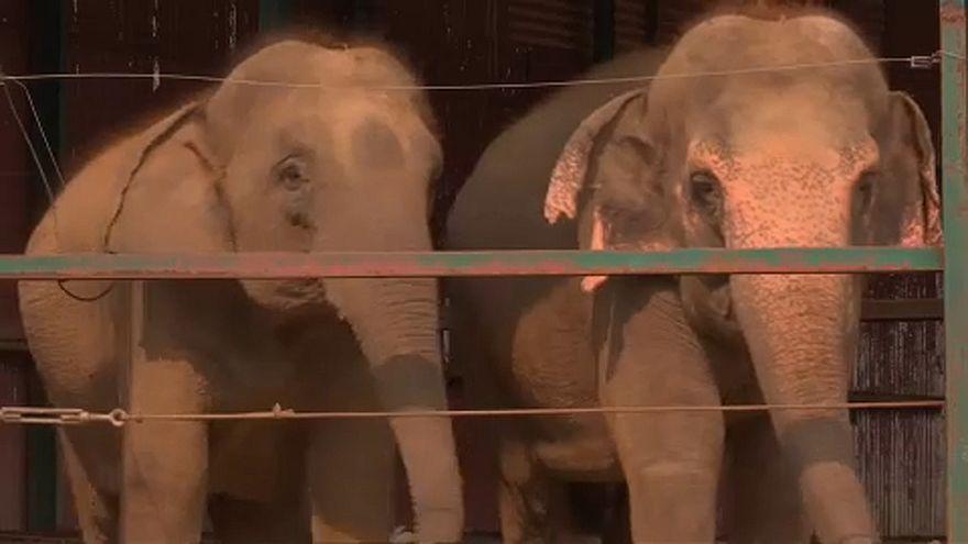 India: l'ospedale degli elefanti