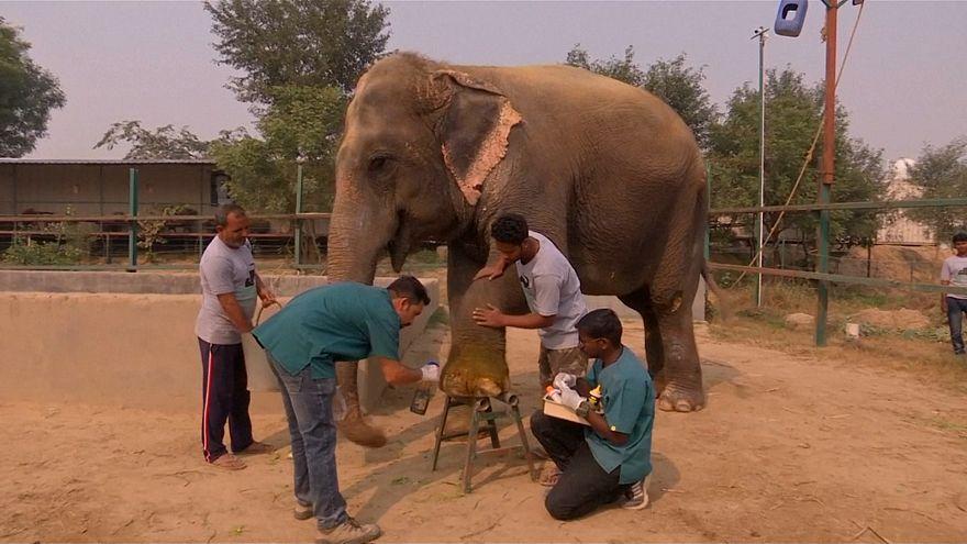 Elefántkórház Indiában