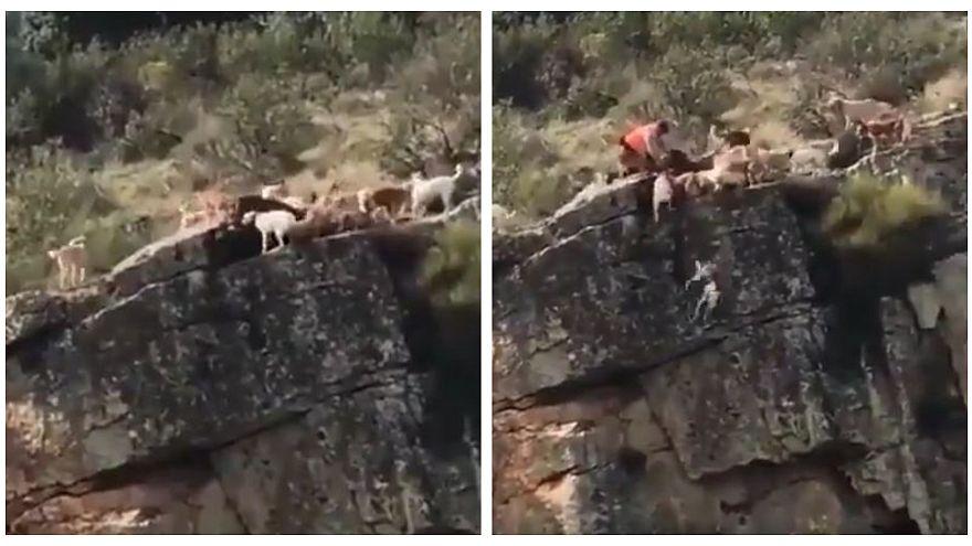 Caccia: cani e cervo precipitano da un dirupo, sdegno in Spagna