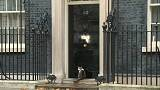 Downing Street cat alone in the rain