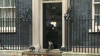 À quand une chatière au 10 Downing Street?