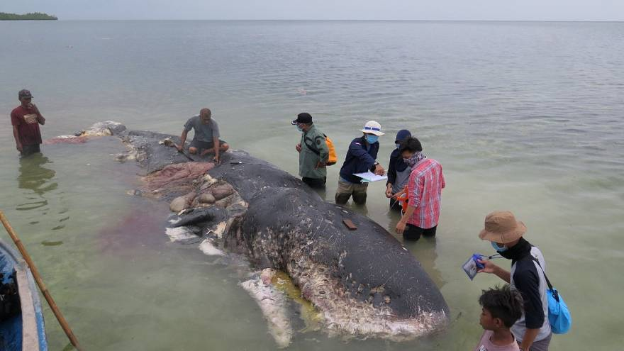Beached whale found with six kilos of plastics in stomach