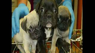 Italian police bust international dog trafficking ring