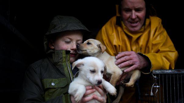 القبض على عناصر عصابة مشبوهة في تهريب الكلاب في إيطاليا