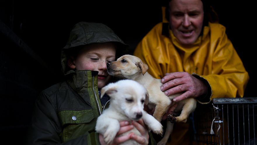 Tratta di cuccioli, sgominata banda internazionale