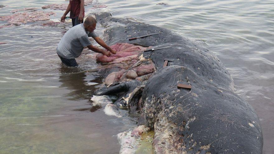 Gobelets, tongs... 6 Kg de plastique avalés par un cachalot en Indonésie