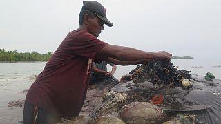 زجاجات وأكياس من البلاستيك في معدة حوت نافق في إندونيسيا